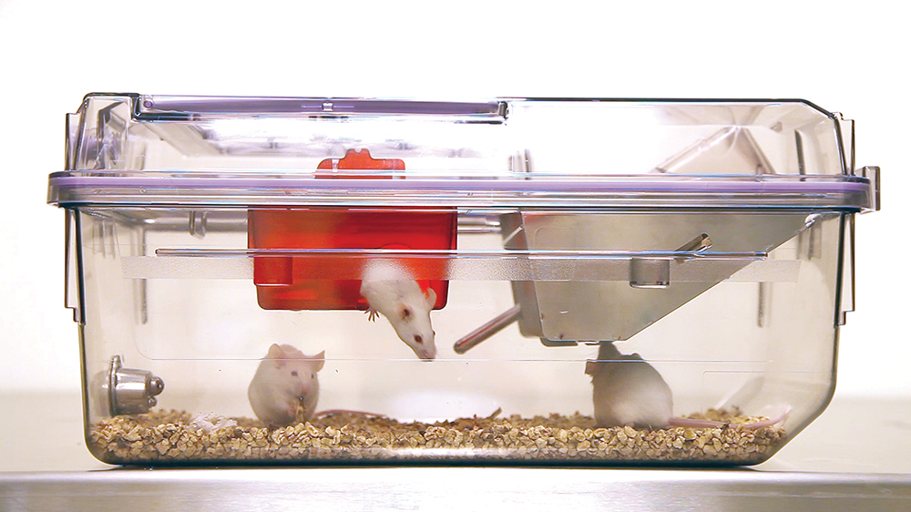 Mice Interacting With The NexGen Mouse Enrichment Loft