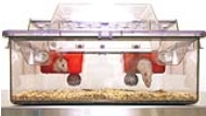 Rats interacting with the NexGen Rat 1800 Enrichment Loft